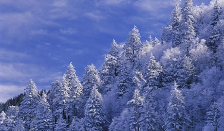 smoky-mountains-winter.jpg